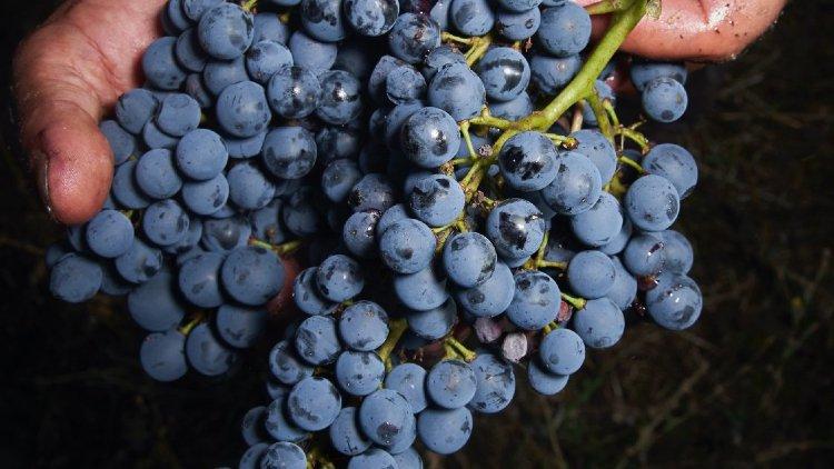 Vine Trail cover image