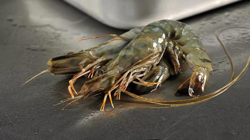 MJ Seafoods (Docklands) cover image