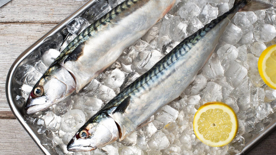 Fish Galore cover image