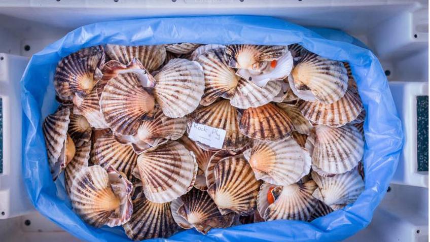 Brixham Seafish cover image