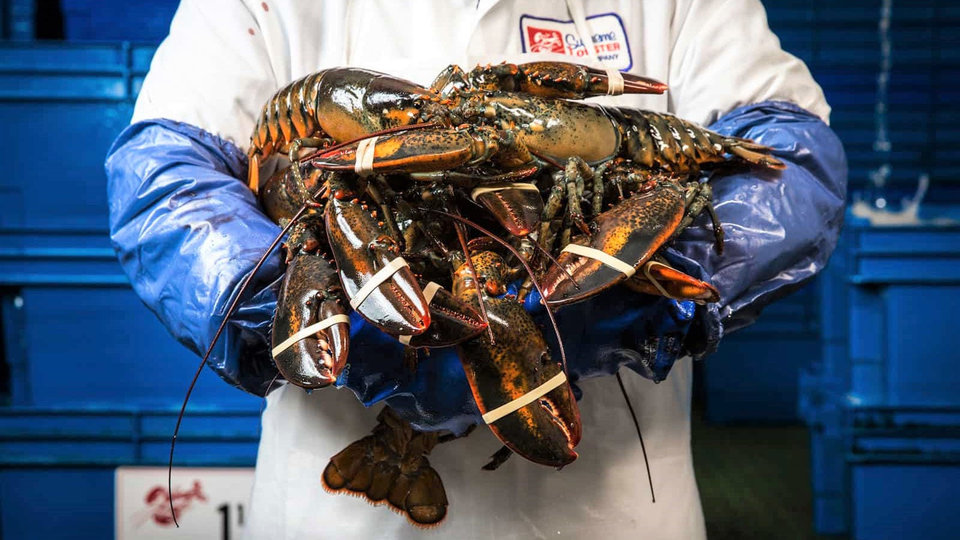 Supreme Lobster cover image