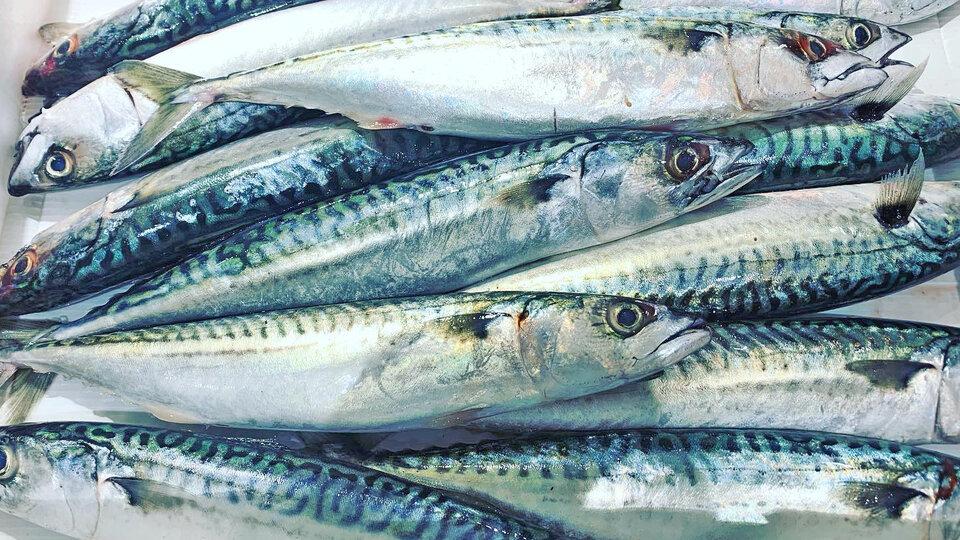 Tarbetts Fishmongers cover image