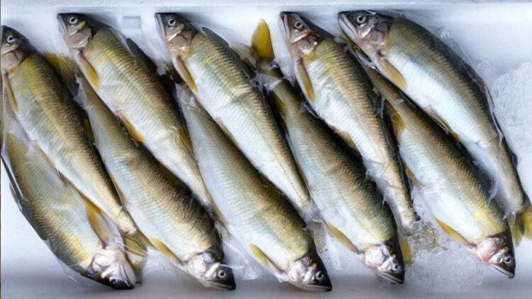 Yama Seafood, Inc. cover image
