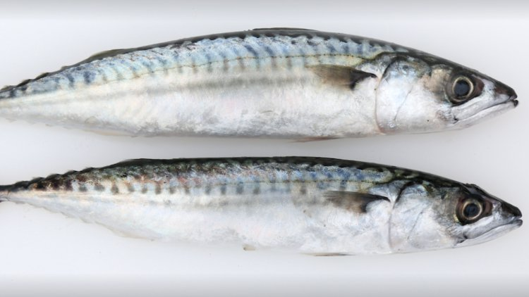 Southbank Fresh Fish cover image