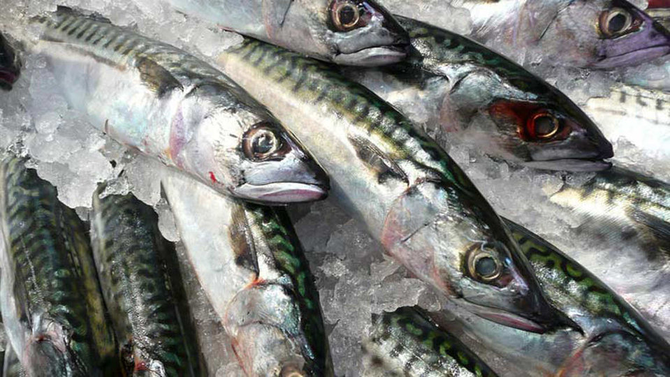 Daily Fish Supplies cover image