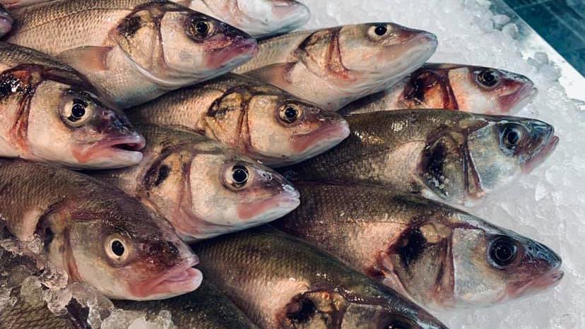 Elias Fish cover image