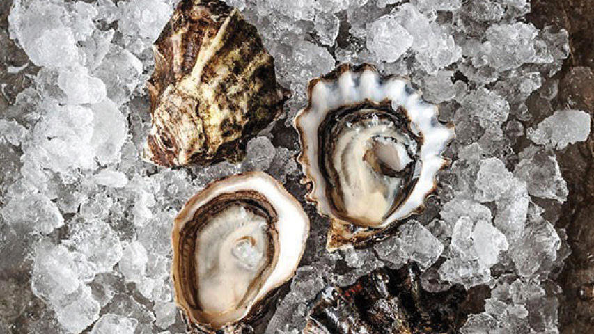 Marinelli Shellfish cover image