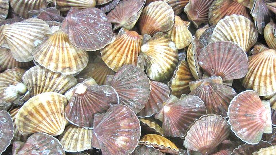 Portland Shellfish cover image