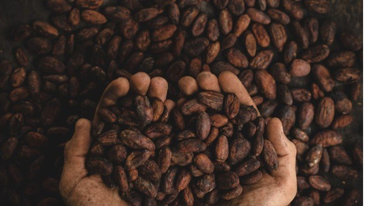 Peaberry Coffee Roasters cover image